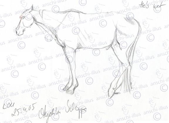 Doesendes_Pferd
