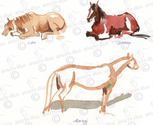 Pferdestudien